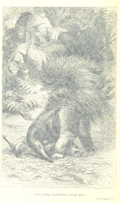 Image from page 200 of The Naturalist on the River Amazons. A record of adventures, habits of animals, sketches of Brazilian and Indian life, and aspects of nature under the Equator, during eleven years of travel