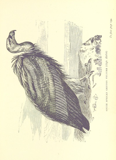 Image from page 175 of The Hunter's Arcadia [i.e. South Africa]