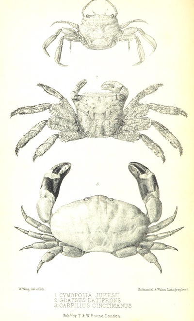 Image from page 822 of Narrative of the surveying voyage of H.M.S. Fly; commanded by Capt. F. P. Blackwood in Torres Strait, New Guinea, and other Islands of the Eastern Archipelago, 1842-1846, together with an excursion into the interior of the Eastern part of Java