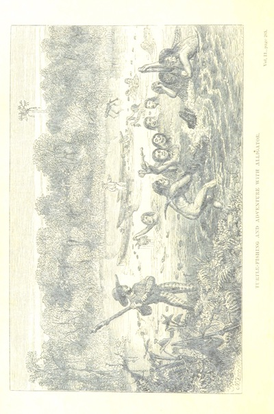 Image from page 280 of The Naturalist on the River Amazons. A record of adventures, habits of animals, sketches of Brazilian and Indian life, and aspects of nature under the Equator, during eleven years of travel