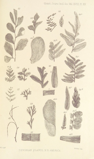 Image from page 51 of On the Flora of the Devonian Period in North-Eastern America. (From the Quarterly Journal of the Geological Society.)