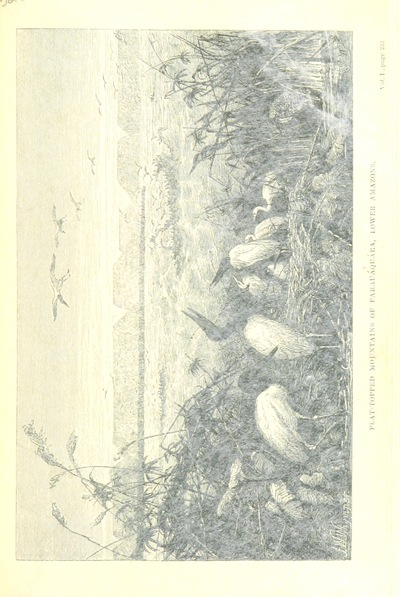 Image from page 257 of The Naturalist on the River Amazons. A record of adventures, habits of animals, sketches of Brazilian and Indian life, and aspects of nature under the Equator, during eleven years of travel