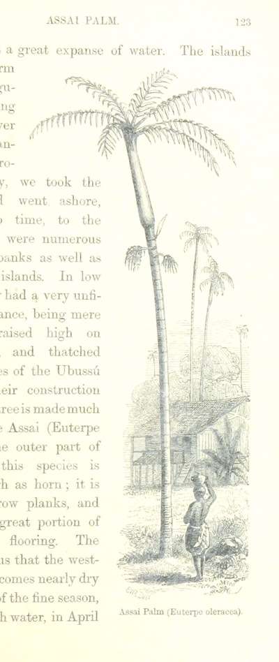 Image from page 143 of The Naturalist on the River Amazons. A record of adventures, habits of animals, sketches of Brazilian and Indian life, and aspects of nature under the Equator, during eleven years of travel