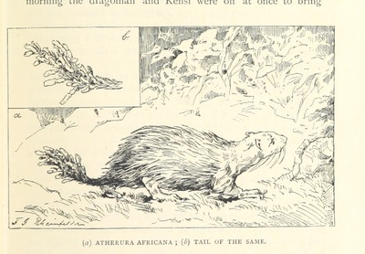 Image from page 123 of Travels in Africa during the years 1875-1878 (1879-1883-1882-1886) ... Translated from the German by A. H. Keane ... Illustrated