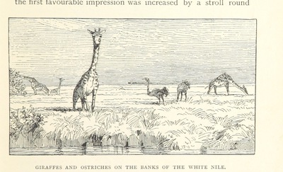 Image from page 229 of Travels in Africa during the years 1875-1878 (1879-1883-1882-1886) ... Translated from the German by A. H. Keane ... Illustrated