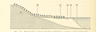Image from page 56 of A Naturalist in North Celebes. A narrative of travels in Minahassa, the Sangir and Talaut Islands, with notices of the fauna, flora and ethnology of the districts visited ... With maps and illustrations