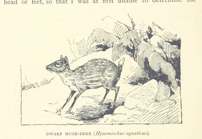 Image from page 284 of Travels in Africa during the years 1875-1878 (1879-1883-1882-1886) ... Translated from the German by A. H. Keane ... Illustrated