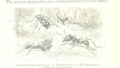 Image from page 42 of The Naturalist on the River Amazons. A record of adventures, habits of animals, sketches of Brazilian and Indian life, and aspects of nature under the Equator, during eleven years of travel