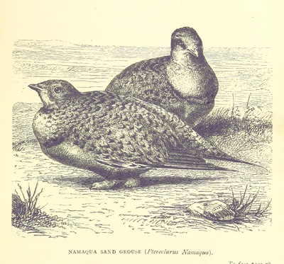 Image from page 113 of The Hunter's Arcadia [i.e. South Africa]