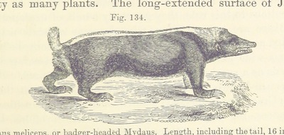 Image from page 391 of [Principles of Geology ... Reprinted from the sixth English edition, etc.]