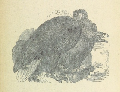 Image from page 367 of Wanderings and Adventures in the interior of Southern Africa