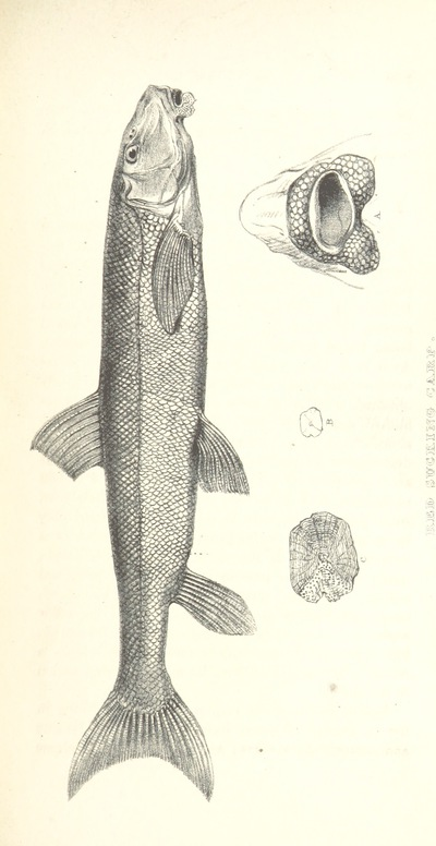 Image from page 561 of Narrative of the Arctic Land Expedition to the mouth of the Great Fish River, and along the shores of the Arctic Ocean, in the years 1833, 1834, and 1835 ... Illustrated by a map and plates