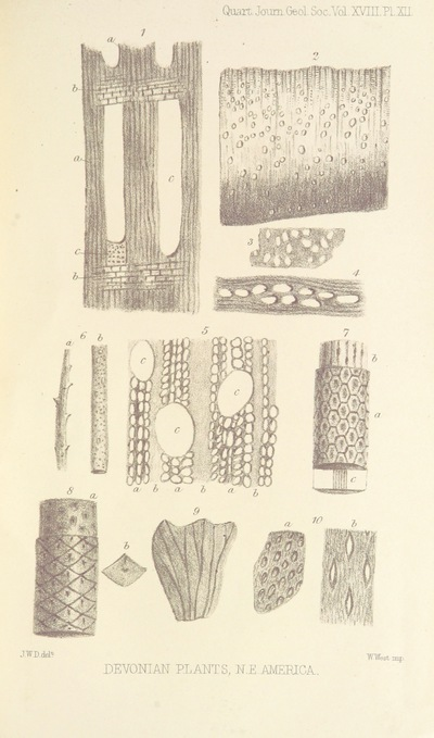 Image from page 45 of On the Flora of the Devonian Period in North-Eastern America. (From the Quarterly Journal of the Geological Society.)