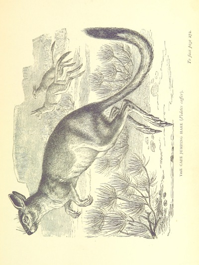 Image from page 327 of The Hunter's Arcadia [i.e. South Africa]