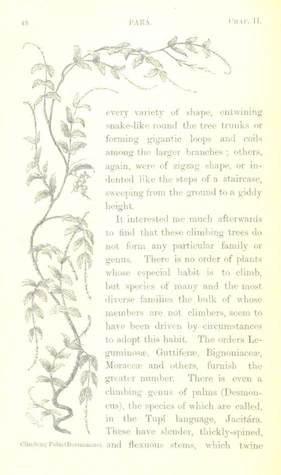 Image from page 66 of The Naturalist on the River Amazons. A record of adventures, habits of animals, sketches of Brazilian and Indian life, and aspects of nature under the Equator, during eleven years of travel