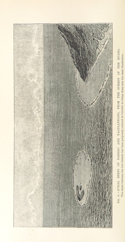 Image from page 80 of A Naturalist in North Celebes. A narrative of travels in Minahassa, the Sangir and Talaut Islands, with notices of the fauna, flora and ethnology of the districts visited ... With maps and illustrations