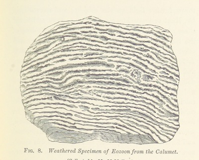 Image from page 63 of Life's Dawn on Earth: being the history of the oldest known fossil remains, and their relations to geological time and to the development of the animal kingdom ... Second thousand