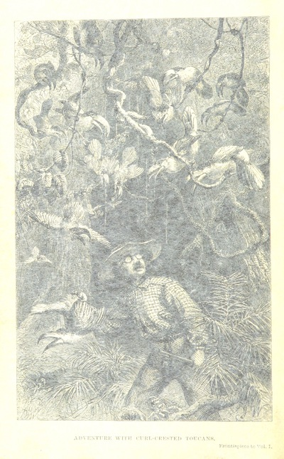 Image from page 8 of The Naturalist on the River Amazons. A record of adventures, habits of animals, sketches of Brazilian and Indian life, and aspects of nature under the Equator, during eleven years of travel