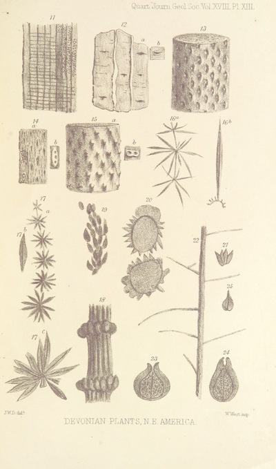 Image from page 47 of On the Flora of the Devonian Period in North-Eastern America. (From the Quarterly Journal of the Geological Society.)
