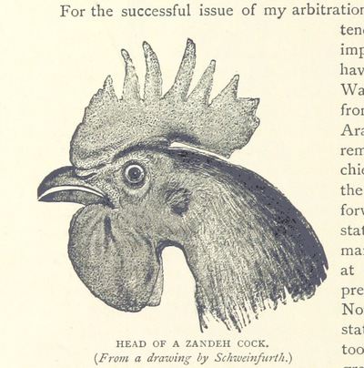 Image from page 290 of Travels in Africa during the years 1875-1878 (1879-1883-1882-1886) ... Translated from the German by A. H. Keane ... Illustrated