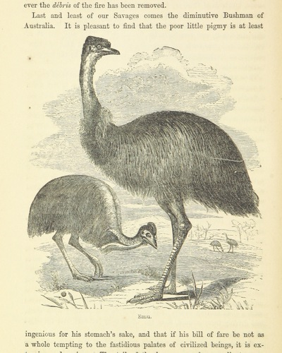 Image from page 380 of Curiosities of Savage Life ... Third edition. With woodcuts and designs by Harden S. Melville, etc