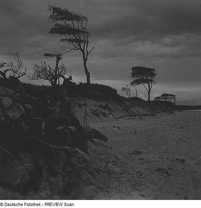 Weststrand des Darß mit Windflüchtern