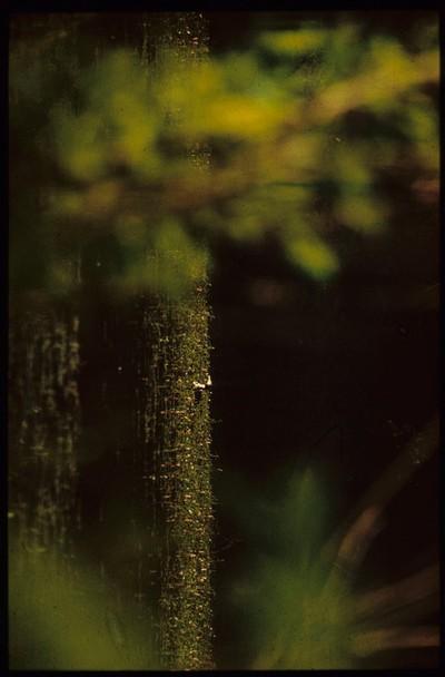 Ártéri hangulat / búbos vöcsök /1980