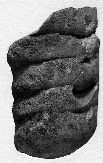 Orthoceras luhai Stumbur, 1956