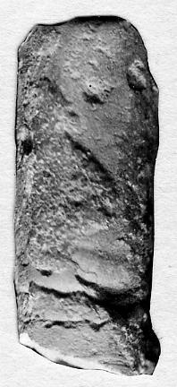 Orthoceras regulare Schlotheim, 1820