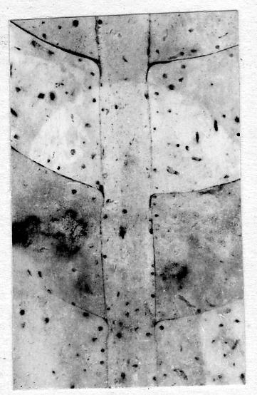 Orthoceras nuperum Stumbur