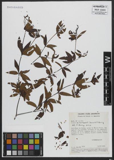 Croton borbensis Secco & P. E. Berry