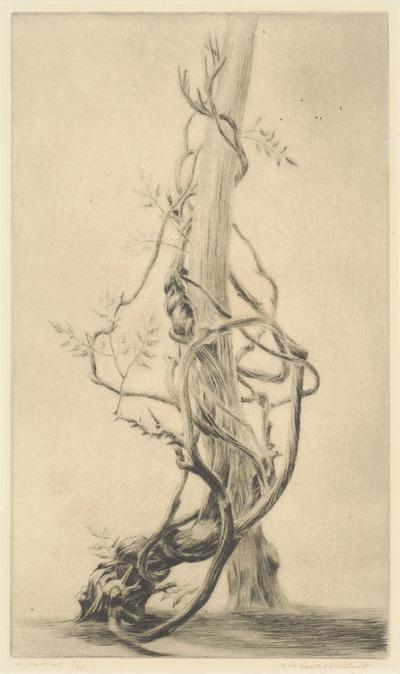 Een naaldgravure getiteld 'Clycinia', circa 1956.