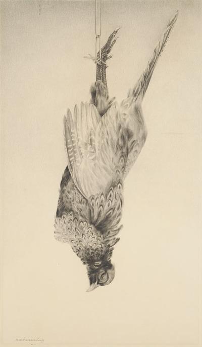 Een tekening van een fazant, 1938.