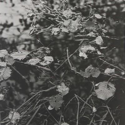 Foto Stilleven in passepartout. Eigen druk. 1980. Hoort bij vrm 01451. (Is vrm 01452.)