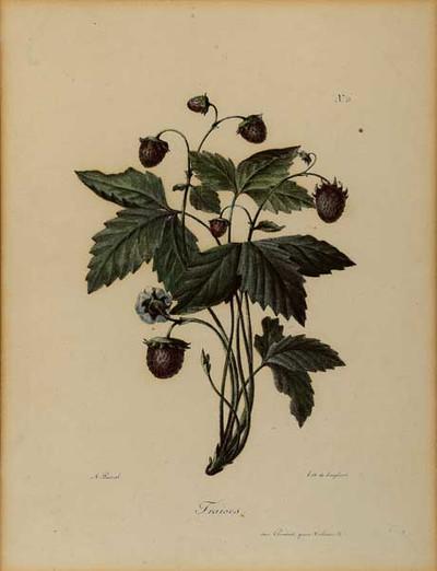 Lithografie met voorstelling van een aardbeienplant met blad, aardbeien en bloesem.