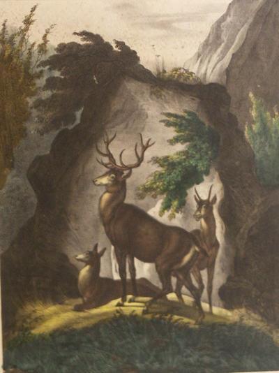 Voor een rotsblok zijn drie herten afgebeeld: in het midden een staande bok en een hinde; op grond ligt een hinde. Aan de rotsen enig groen.