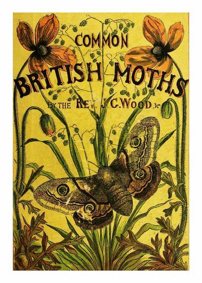 Common British moths
