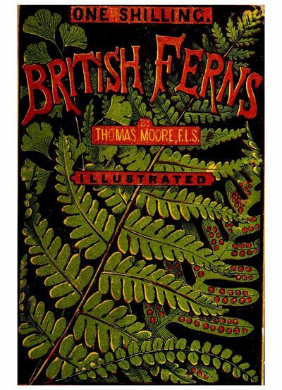 British ferns