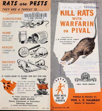 Kill rats with warfarin or Pival /
