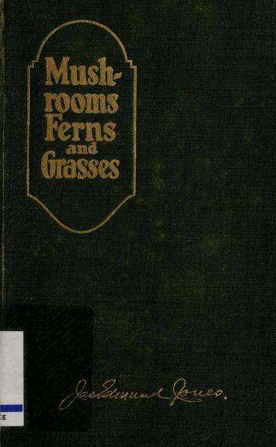 Mushrooms, ferns and grasses