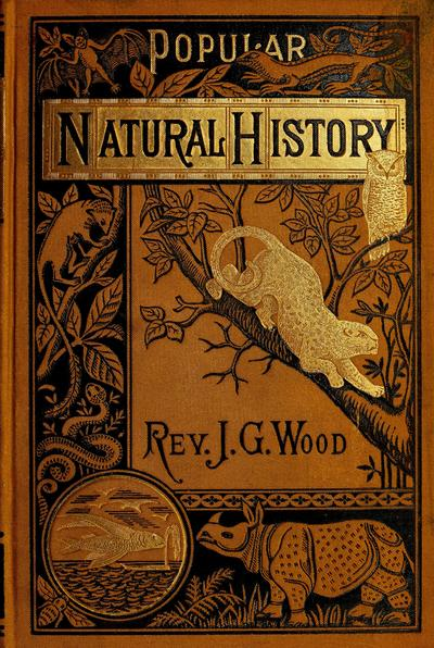 Popular natural history. By the Rev. J.G. Wood. With five hundred illustrations.
