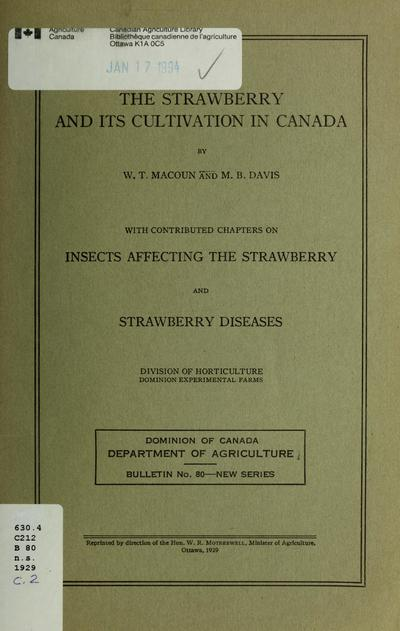Insects affecting the strawberry