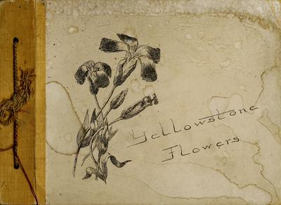 Yellowstone flowers.