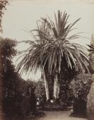 Garden of the