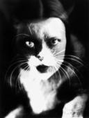 Io + gatto: sovrimpressione del volto di Wanda Wulz con l'immagine del proprio gatto