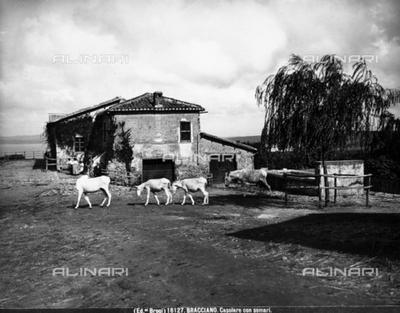 Cottage with donkeys, near Bracciano.