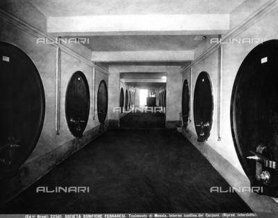 Interior of the Carpani cellar in the rural center of Mesola, Ferrara hinterlands.