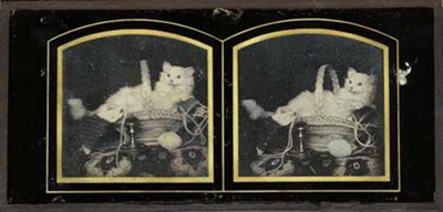 Still life with cat in a basket