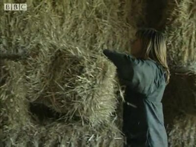 Country farmer 10/10/1999