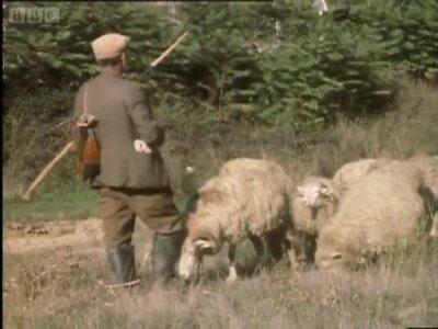 Farming 24/01/1982